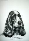 23 Tête de Cocker femelle - Black and white Cocker Spaniel head