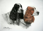 29 Deux têtes de Cockers noir et feu - Two Cocker Spaniels heads (black and tan)