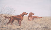 48 Setters Irlandais en plaine - Two irish Setters in field