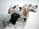 52 Trois Setters - Three English Setters (Original)
