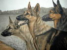 Three Alsatian Shepherd head - Trois têtes de Berger (Original)