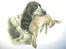 Cocker et Lièvre - Cocker Spaniel and Hare (Original)