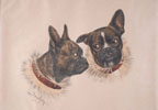 Bulldog Français - French Bulldog (Original)