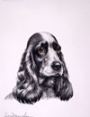 23 Tête de Cocker femelle - Black and white Cocker Spaniel head (Original)