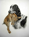 28 Cocker et Lapin - Cocker Spaniel and Rabbit (Original)